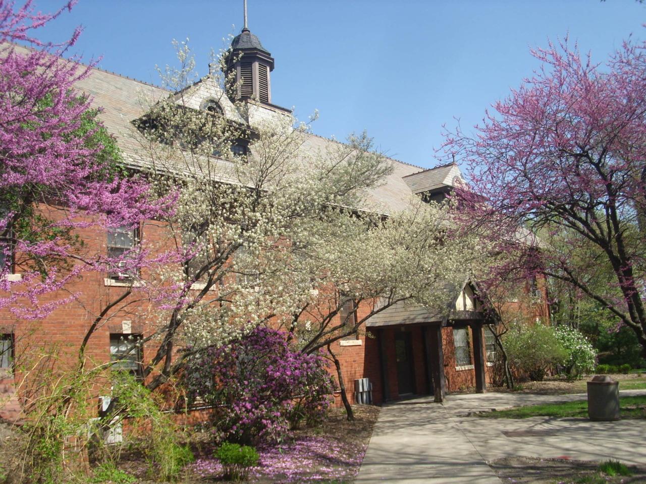Latest Obsession: Flowering Trees @ISU